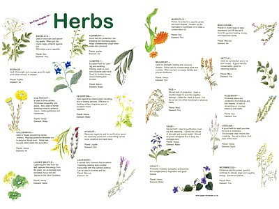 Herbs Easy Guide : Pagan Wholesale, Pagan Wholesale,New Age