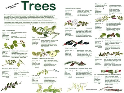 Trees Easy Guide